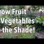 Verduras que crecen bien en Shade