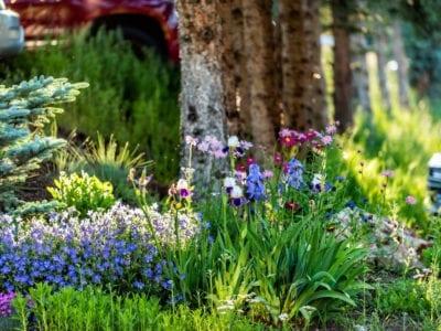 All Season Flower Gardens - Diseño de jardines durante todo el año