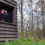 Información de Backyard Bird Blind - Consejos para hacer un pájaro ciego