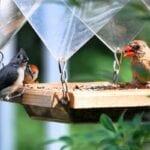 Invitar A Las Aves A Su Jardín De Alimentos
