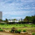 Jardinería de contorno para minimizar el riego y maximizar los rendimientos