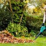 Limpieza de jardines durante el invierno: qué hacer en el jardín durante el invierno