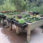 Multando en el jardín de la permacultura