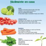 Pasos para cultivar alimentos ricos en nutrientes