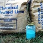 Preparación de fungicidas de Burdeos: cómo hacer fungicidas de Burdeos