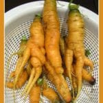 Problemas de la zanahoria: lo que causa deformidades en las zanahorias