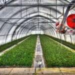 Proteger los cultivos de clima frío con un marco frío