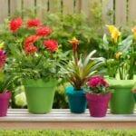 Qué plantar ahora: Guía del jardín de enero