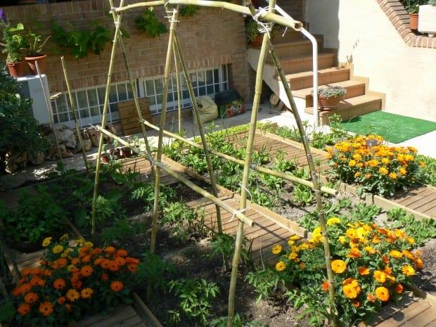 Qué plantar ahora: Guía del jardín de mayo