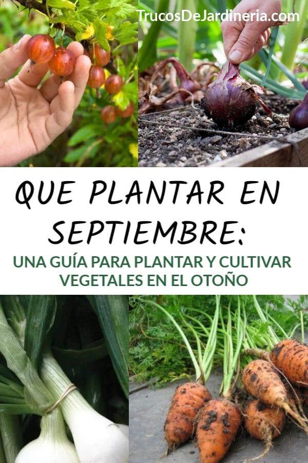 Qué plantar ahora: Guía del jardín de septiembre