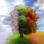 Hermosas plantas que cambian dramáticamente