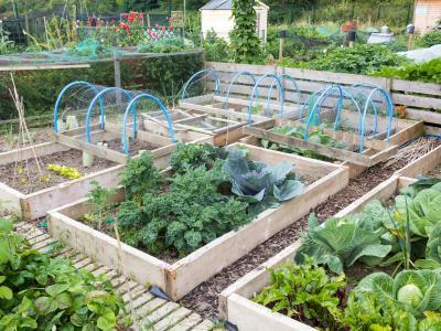 Consejos de rotación de cultivos para jardines vegetales