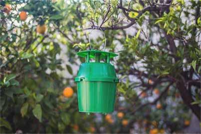 Son seguras las trampas de feromonas: aprenda sobre el uso de trampas de feromonas en los jardines
