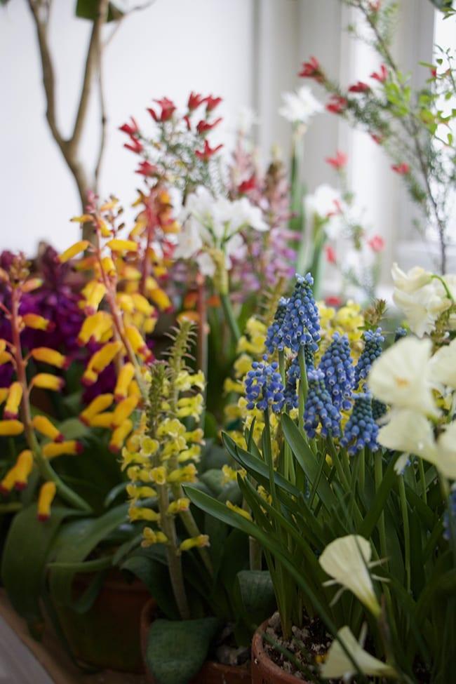 ¿Su jardín de permacultura necesita narcisos?