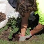 Tareas del jardín de abril: jardinería en abril en el noreste