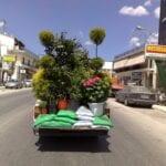 Cuidado de plantas reubicadas: consejos para transportar plantas a otra ubicación