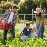 ¡Tres planes de Jardín de la Victoria para conseguir la jardinería!